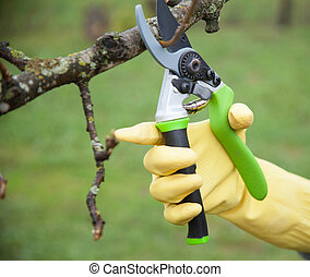 Hands with gloves of gardener doing maintenance work,...