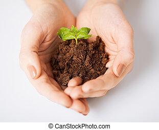 hands with green sprout and ground - picture of woman hands...