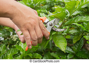 Hands with  pruner in the garden