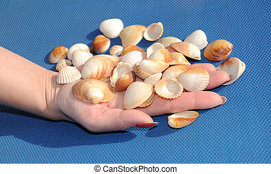 hands with shells on blue background 2