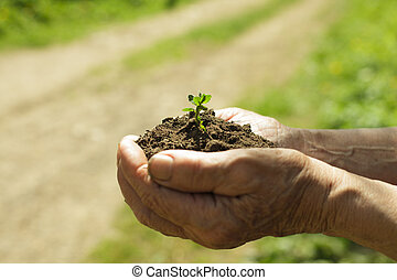 Hands with soil and plant