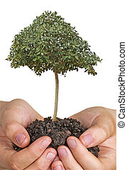 Hands with tree