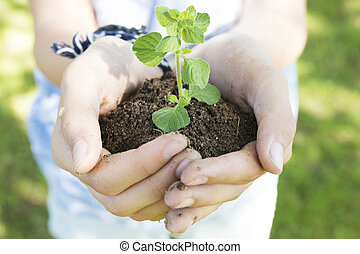 hands with young tree, concept of ecology and environment