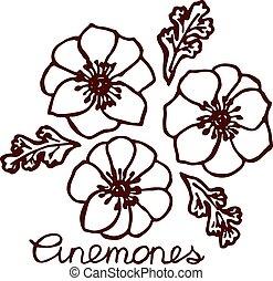 Handsketched bouquet of anemones