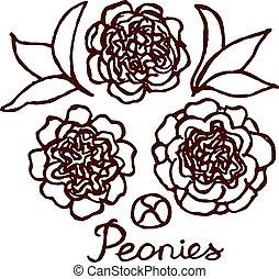 Handsketched bouquet of peonies