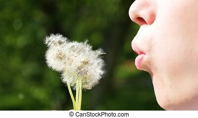 Handsome boy blowing dandelion seeds in the Park , slow motion