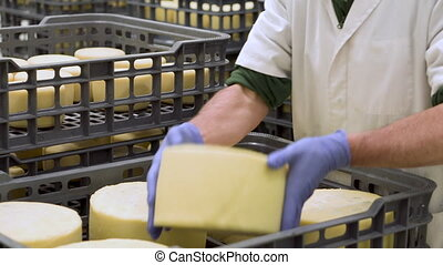 Handsome cheesemaker is checking cheeses seasoning at dairy factory in 4k UHD video.