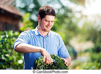 Handsome gardener pruning little boxwood bush, green sunny natur