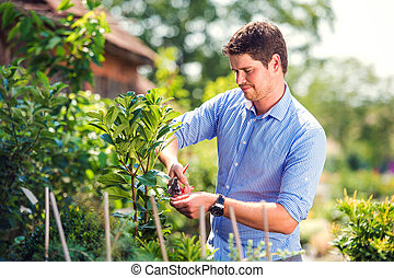 Handsome gardener pruning little tree, green sunny nature