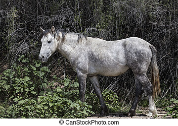 Handsome grey stallion posing for the camera - Wild Horses...