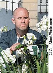 handsome man gardener cutting flowers