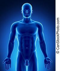 hane räkna, in, anatomisk, ställning, övre, del