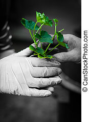Hang ginving young plant to another hand in selective colors