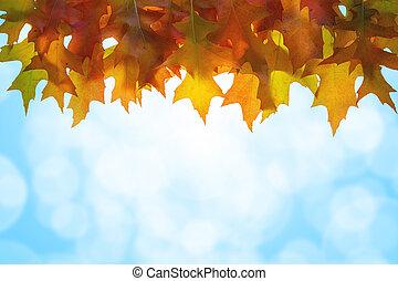 hangend, eik, bladeren, hemel, achtergrond