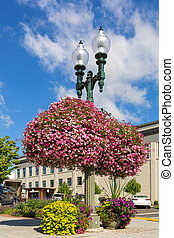 Hanging and Potted Plants in Lynden Washington