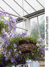 Hanging basket in garden center - Hanging basket filled with...