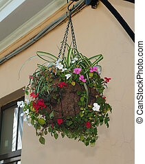 Hanging basket of flowers on background