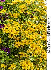 Hanging basket of yellow flowers