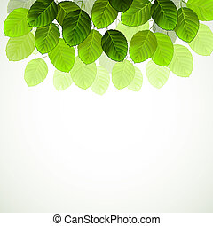 green leaves  - hanging branch with fresh green leaves