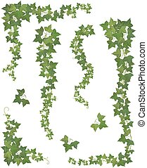Hanging branches of ivy. Set - Set of Hanging branches of...