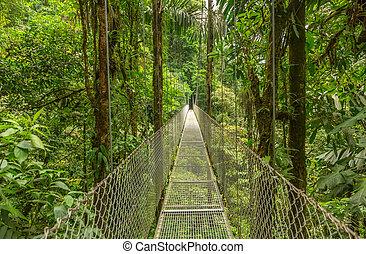 Hanging bridge in Costa Rica - Suspended bridge at natural...