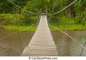 Hanging bridge in the forest.