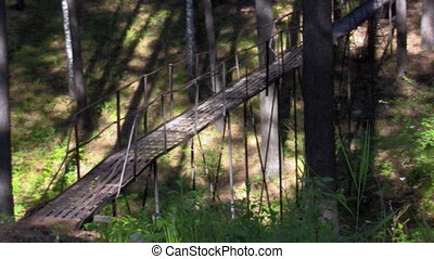 hanging bridge in the forest