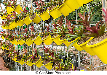 Hanging bromeliad pot
