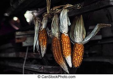 hanging dried corn