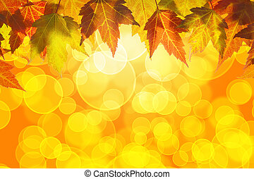 Hanging Fall Maple Tree Leaves Background - Hanging Fall...