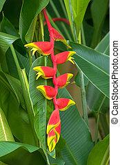 (hanging, flor, falso, jardín, singapur, heliconia, rostrata, pájaro, langosta, paradise), garra