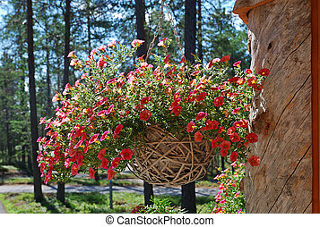 Hanging flowerpot with petunia on the large trunk chapped. -...