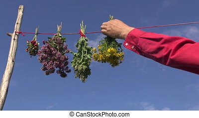 hanging fresh medical herb bunch on string. Healthy life...
