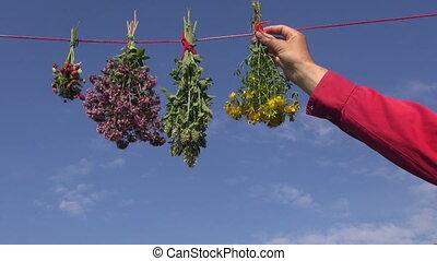 hanging fresh medical herbs flowers