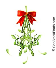 Mistletoe Bunch and White Berries Hanging with A Christmas Red Ribbon For Christmas Celebration, Isolated on White Background