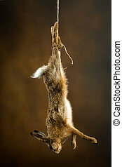 Hanging hare