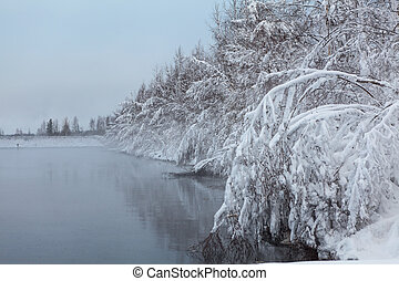 Hanging heavy snow-covered branches of trees on lake shore