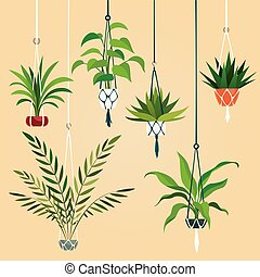 Hanging house plant. Indoor plants with macrame hanger. ...