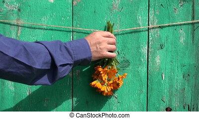hanging  medical flowers herbs