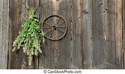 hanging medical herbs bunch on wall