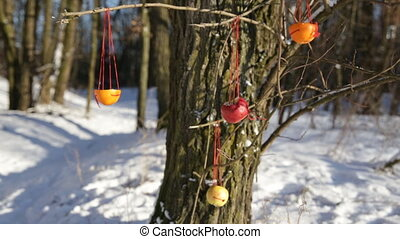 hanging on a tree original feeders