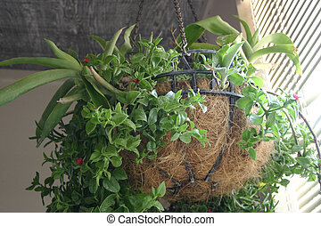 hanging Plant - basket