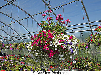 Hanging planter in the greenhouse for sale