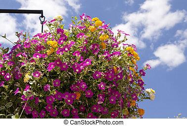 Hanging planter shot agains blue sky