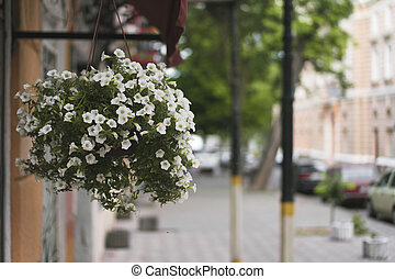 Hanging pot with flowers