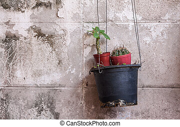 Hanging pot with small cactus