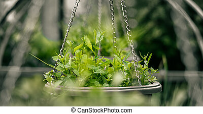 hanging pots with green plants in the garden