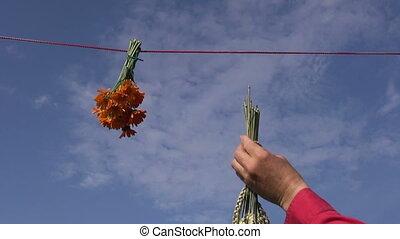 hanging varios medical herbs