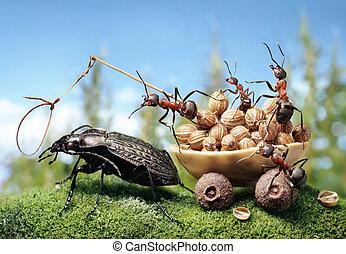hangya, felszerszámozó, a, bogár, hangya, tales