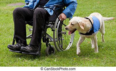 hans, labrador, hund, handikappad, ägare, guide